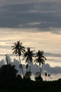 palm trees against a clouded sky