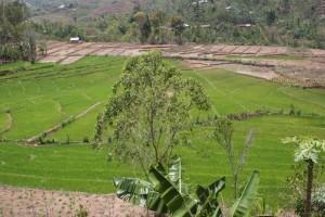 circular pattern rice padis