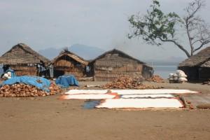 salt drying in Nanggaha