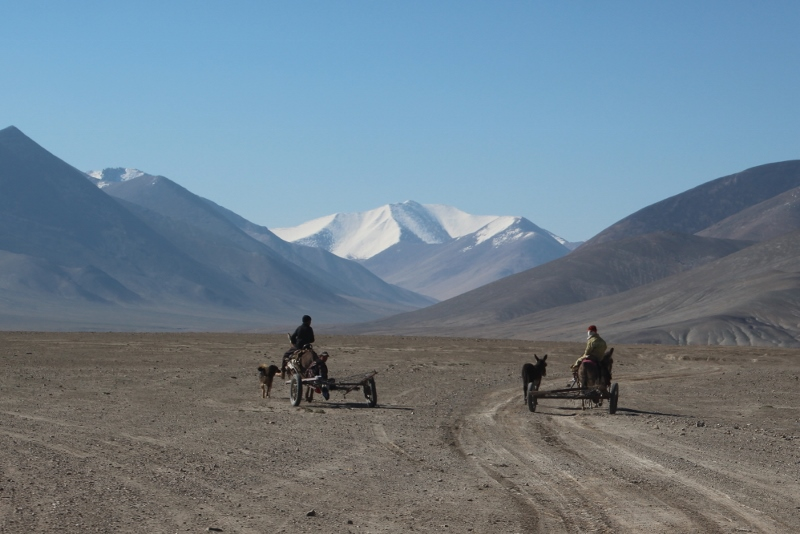 two donkey carts on their way to find fire wood
