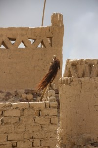horsetail hair adorning a tomb in the Murghab cemetery