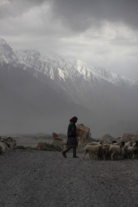 sheep on the road along the Panj River, Afghan mountains in the back