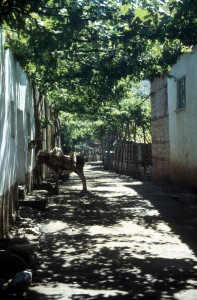 shaded street in Lin