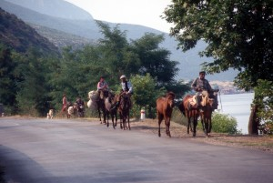 horses along the lake side road