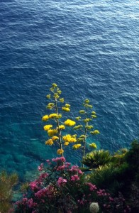 flowers along the Adriatic coast