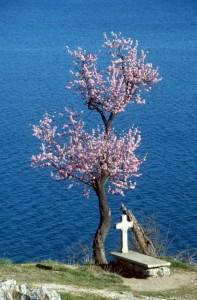 life and death at the shore of Lake Ohrid