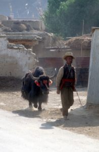 a man and his yak