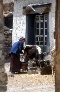 village livelihood