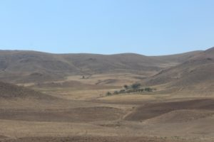 the landscape is rather monotonous, and dry