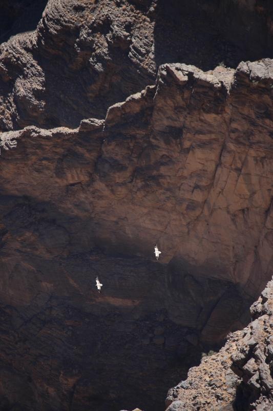The Oman blog