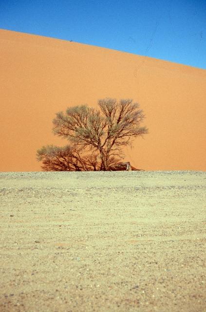 the Namib Desert